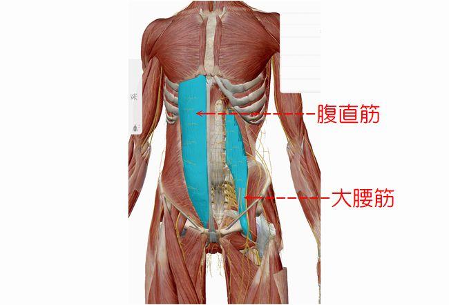 腹筋を割るための筋トレ、腹直筋と大腰筋