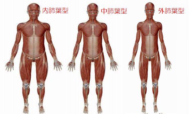 3種類の肺葉型